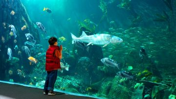 Family Day at the Vancouver Aquarium